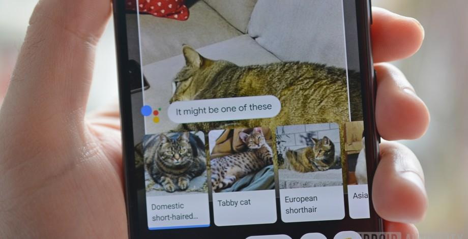 Google Lens identifikon racat e kafshëve që dëshironi ju!